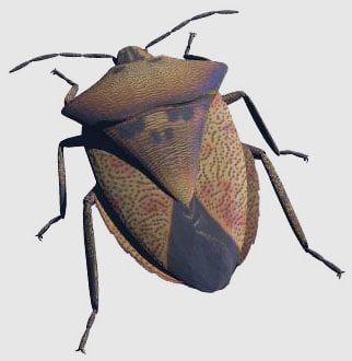 3ds shield bug
