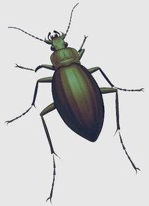 3ds golden beetle
