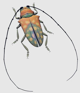 3d model african beetle