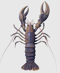 crustacean 3d model