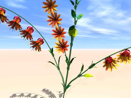 flower plant wort zipped 3d model