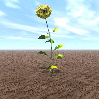 sun dial flower plant 3d model