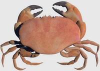 crab.ZIP