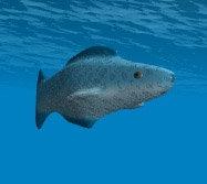 lightwave swimming fish