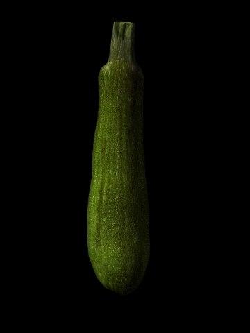 3d model squash zucchini