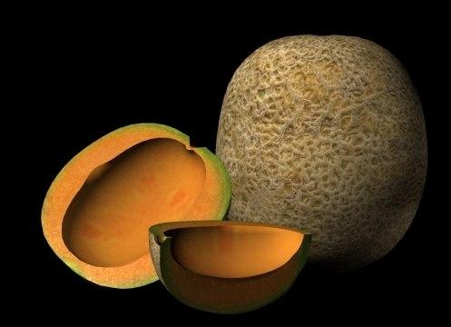 3d cantaloupe melon model