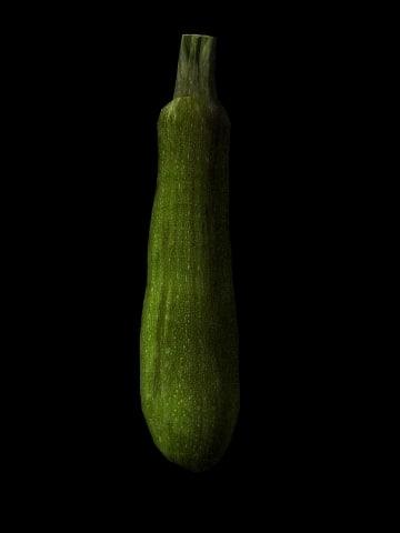 squash zucchini 3d model