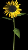 plant flower 3d model