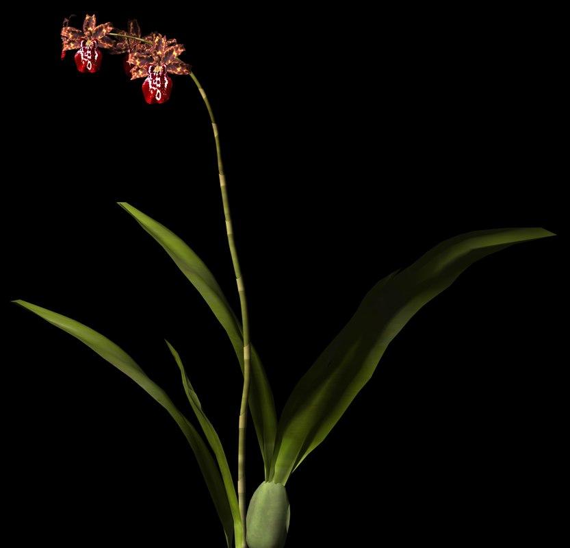 3ds plant flower