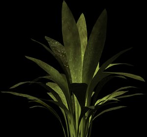 plant petals stem 3d model