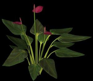 plant petals stem 3ds