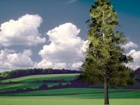 3d model animation master 5 tree