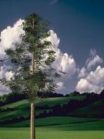 animation master 5 tree 3d model