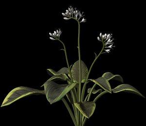 br4 plant petals stem