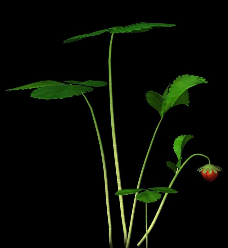 3d plant petals stem model