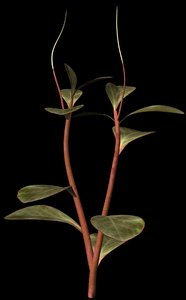 plant petals stem 3d br4