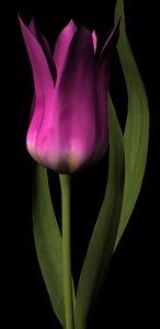 3d plant flower