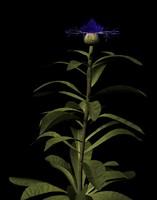 3d model of plant flower