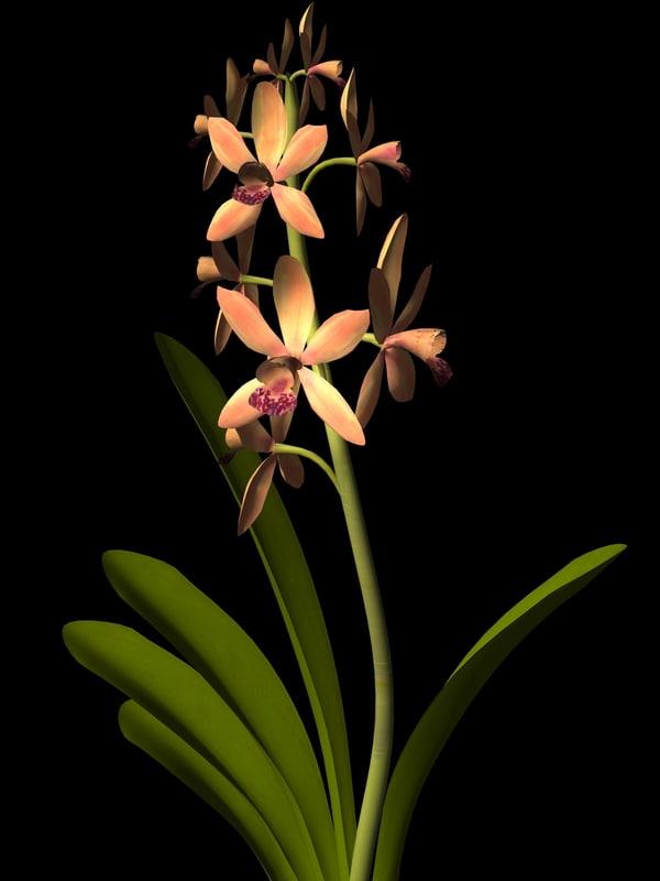 obj plant flower