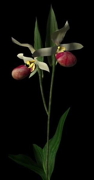 plant flower obj