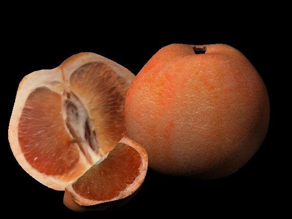 3d model of grapefruit fruit