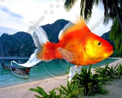 red fish 3d model