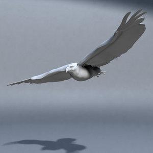 hawk bird 3d model