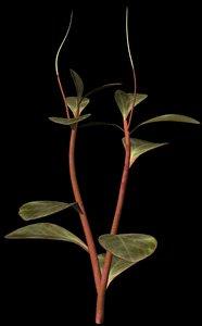 plant petals stem 3d obj