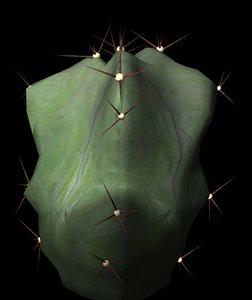 succulents cacti petals 3d model