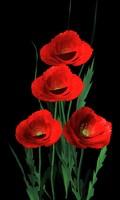California Poppies.obj