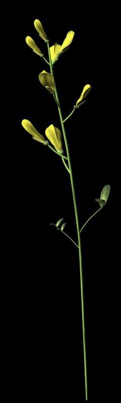 wild plant flower 3d obj