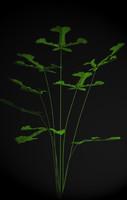 3d plant petals stem