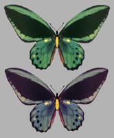 butterfly wings obj