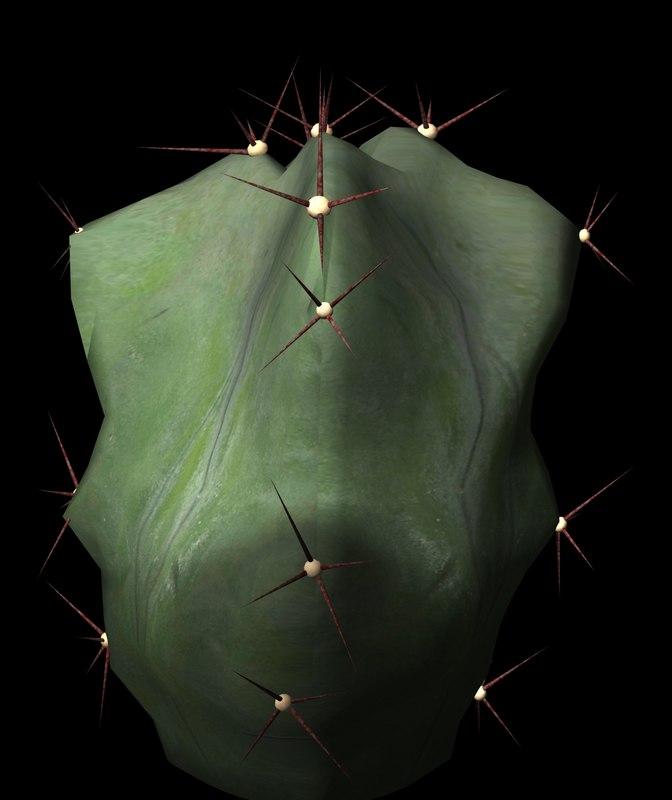 3d succulents cacti petals model