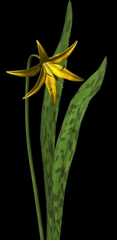 3d wild flower plant model