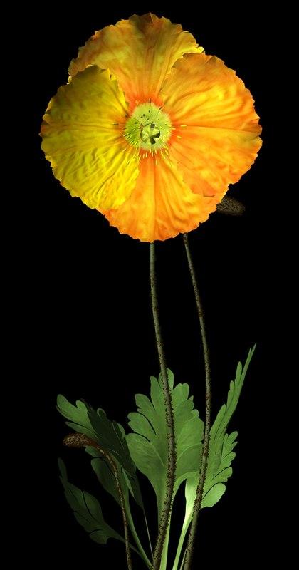 lwo plant flower