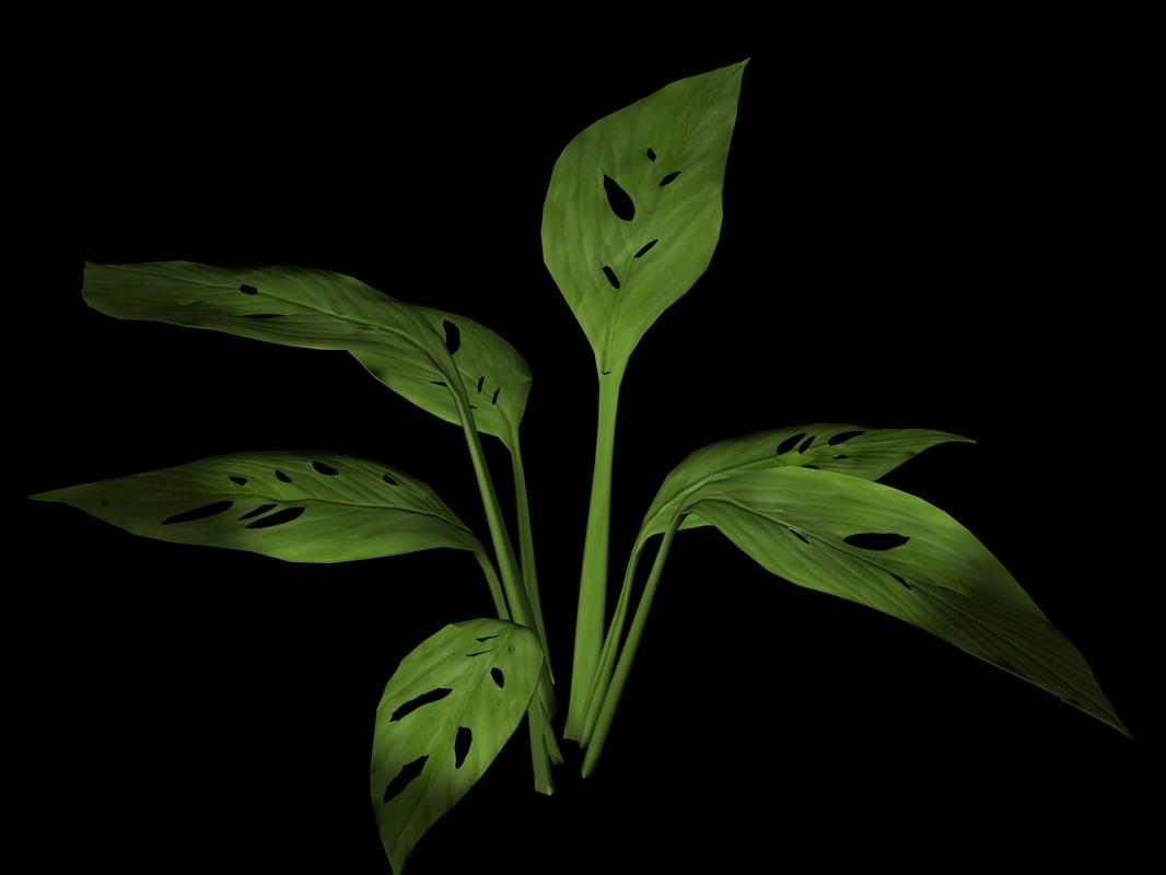 plant petals stem lwo