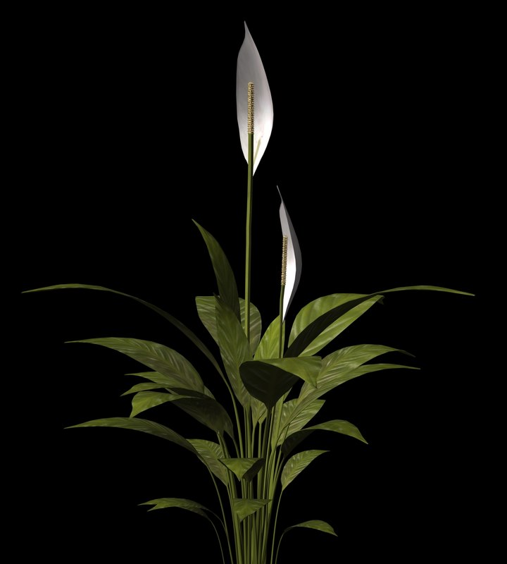 lightwave plant petals stem