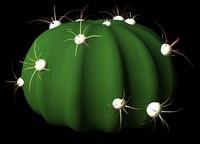 succulents cacti 3d lwo
