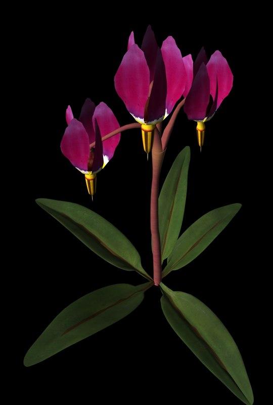 wild flower plant 3d model