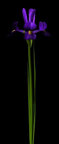 plant flower 3d cob