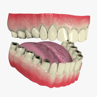 mouth teeth 3d model