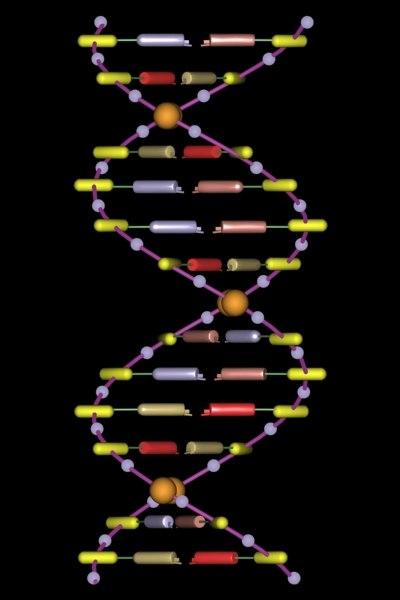 3d model of dna molecule