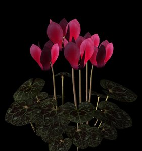 truespace plant flower