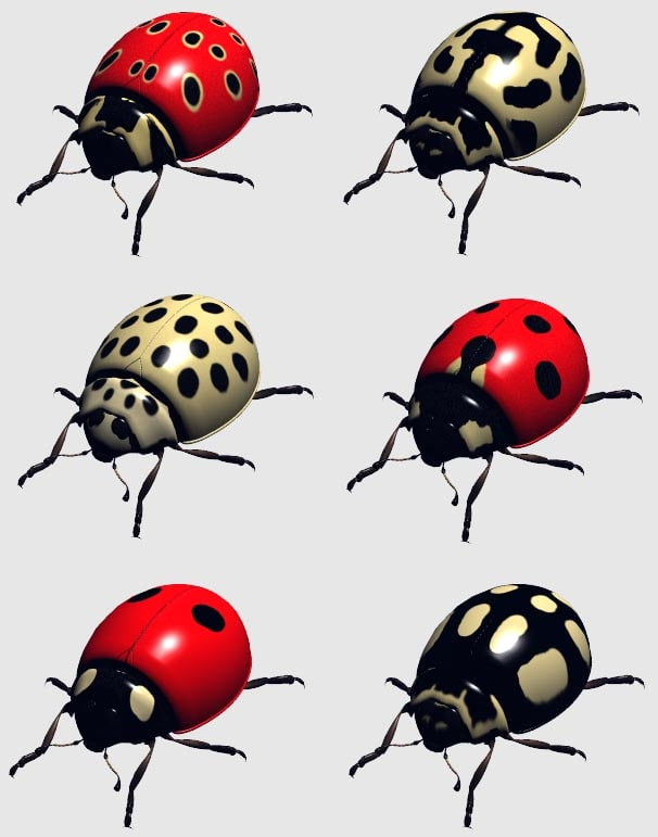 ladybird beetle obj