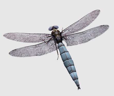 dragonfly darter 3d obj