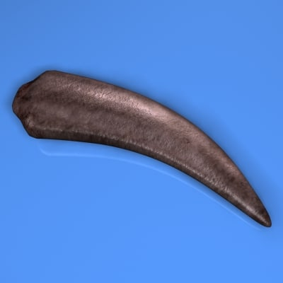 3d animal claw model