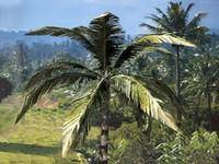 realistic tree lwo