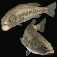 blackbass bass 3d model