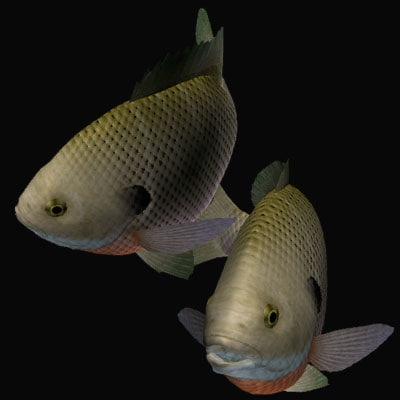 bluegill swimming 3d 3ds